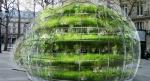 Capsules vertes Office hollandais des plantes d'intérieur